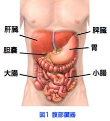 3. 肝移植とはどのような治療で...
